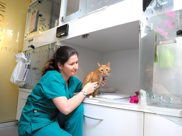 Donna Willison in Cat Ward