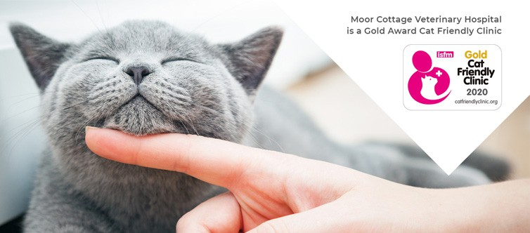 Moor Cottage Veterinary Hospital in Binfield, Bracknell