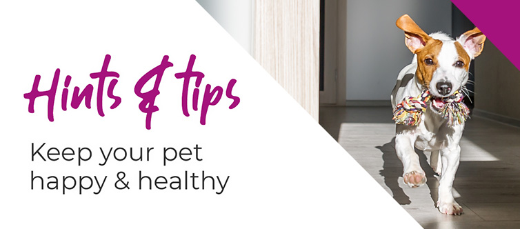 Managing your pets weight at home