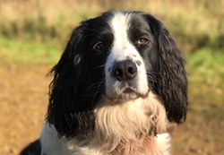 braacknell vets-hector-dog