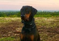 bracknell-vets-hugo-dog