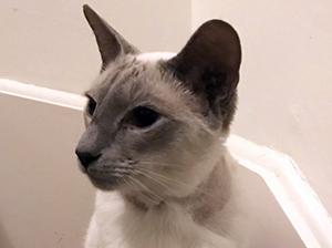 cat-ash-bracknell-vets