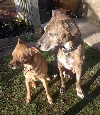 doggie-dog-moor-cottagevets-mcvh